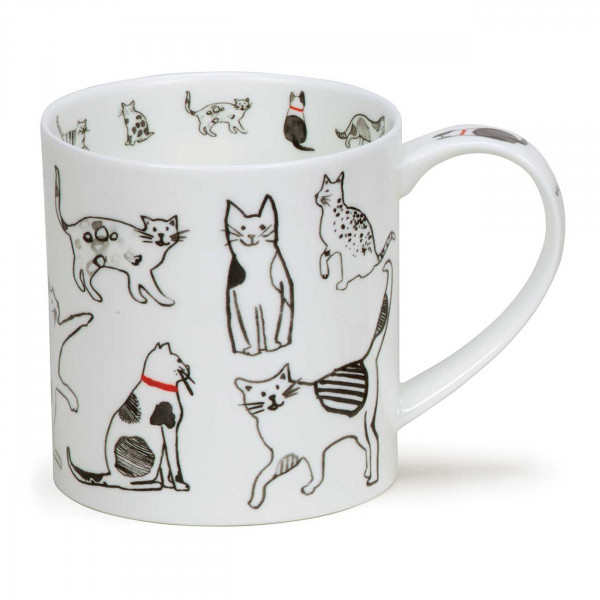 Becher Orkney Cat Co