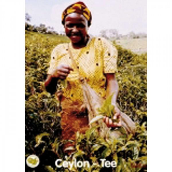 Plakat Tee A3 Motiv Ceylon